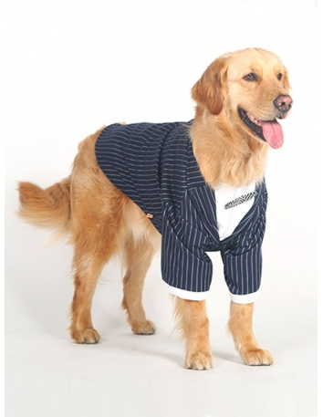 Elegant striped jacket for dog