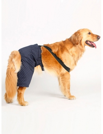 Elegant striped pants for dogs