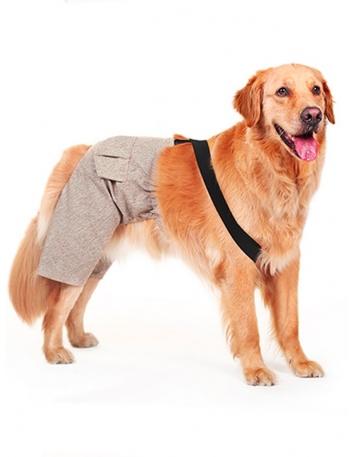 Dog pants for wedding or...
